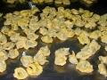 festa-della-birra-2005-150-copia-copia