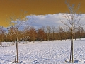 Bosco Inverno