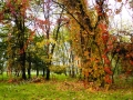 Bosco autunno n1