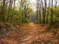 Sentieri nel bosco Autunno